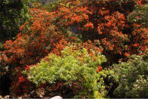 Đến Sông Chày – Suối Moọc ngắm hoa Vàng Anh