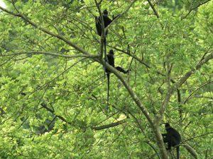 Kỳ thú với rừng mưa Kẻ Bàng