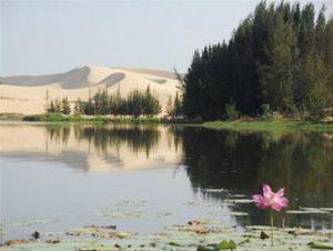 Bàu Sen – Hồ nước ngọt lớn nhất sát Quốc lộ 1A