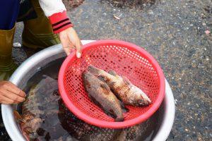 Phục vụ khách du lịch Quảng Bình bằng hải sản tươi sống