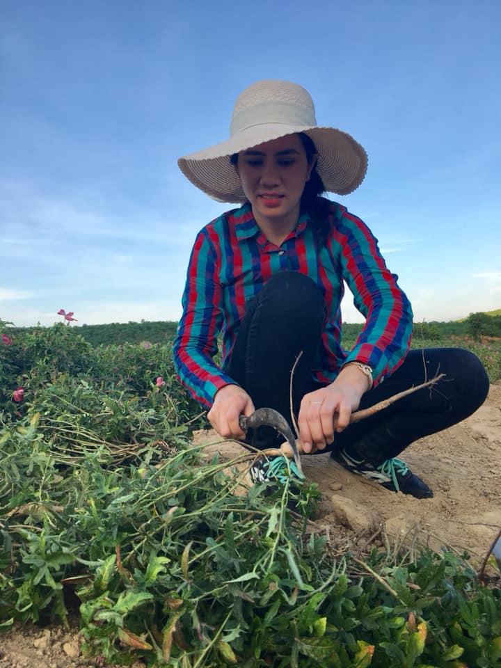 Du khách xuống đồng thu hoạch Sâm, trải nghiệm đặc biệt- Nguồn fb Phượng Trương