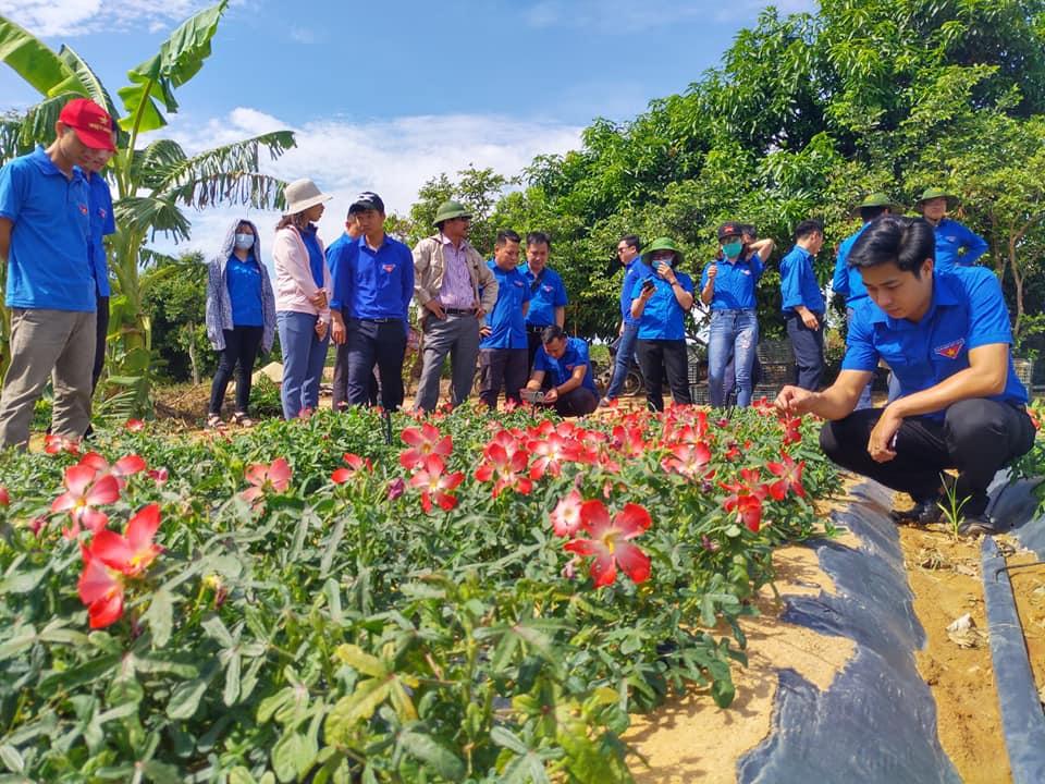 Đoàn khối cơ quan tỉnh Hưng Yên ghé thăm nông trại Sâm Bố Chính- Nguồn FB Đồng Hoàng