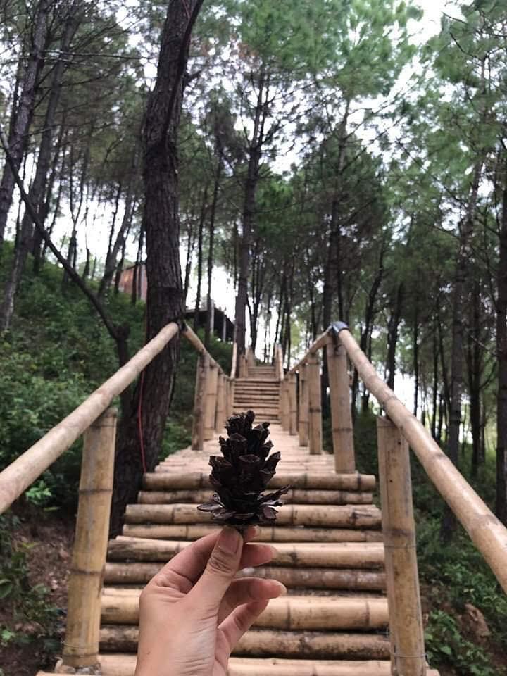Những bậc thang làm bằng gỗ uốn lượn quanh Happy Hill- Nguồn Internet
